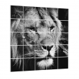 Foto over meerdere squares