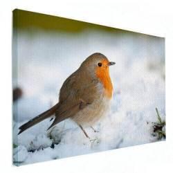dierenfoto op canvas vogel