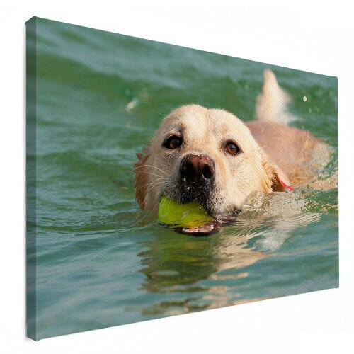 dierenfoto op canvas hond
