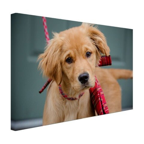 Golden Retriever op canvas