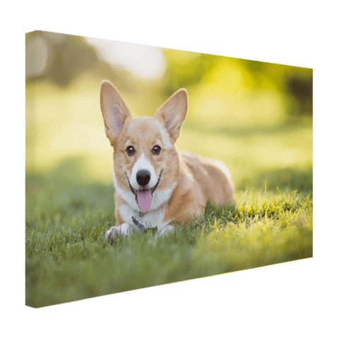 Puppy op canvas