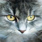 Kat foto op canvas schilderij