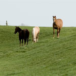 Paardenschilderij foto op canvas